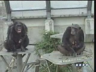 documental ai bebe chimpances inteligencia 10