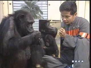 documental ai bebe chimpances inteligencia 13