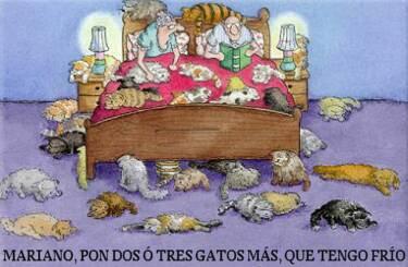 humor grafico gatos gatuno 1