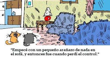 humor grafico gatos gatuno 2