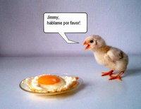 pollito huevo jimmy hablame por favor