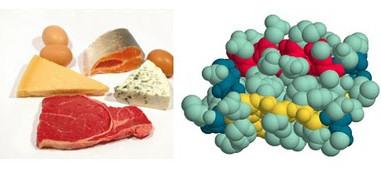 proteinas alimentos polipeptidos polimeros