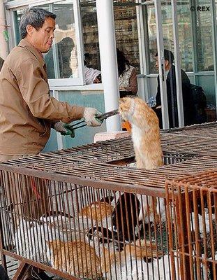 chinos gatos restaurante