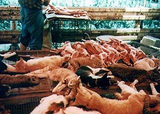 gatos muertos China