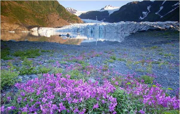 glaciar pedersen alaska estados unidos