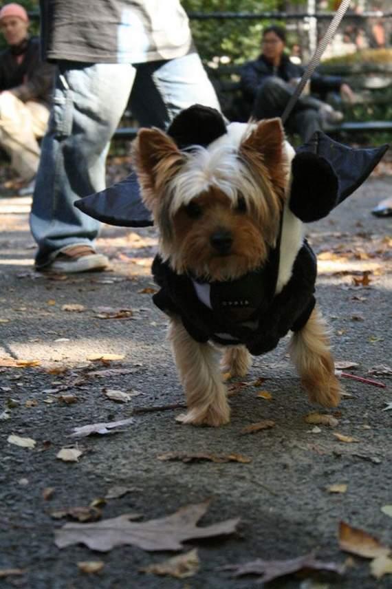 halloween perros disfraces disfraz traje 01