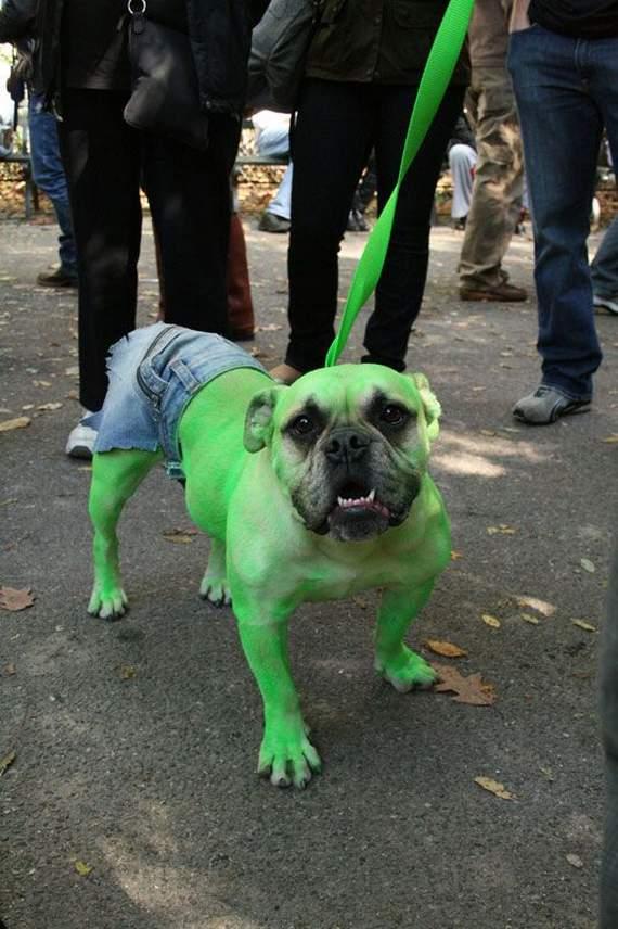halloween perros disfraces disfraz traje 02