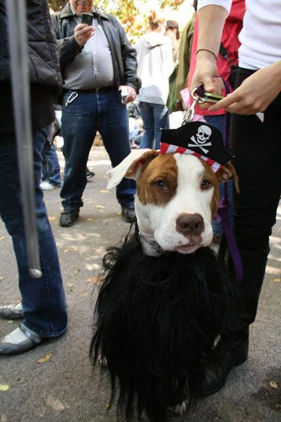 halloween perros disfraces disfraz traje 03