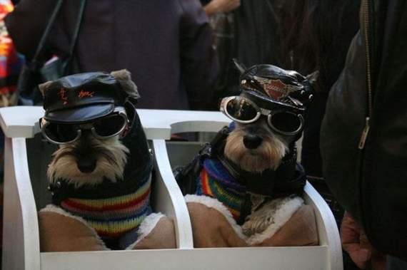 halloween perros disfraces disfraz traje 04
