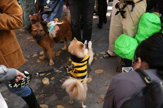 halloween perros disfraces disfraz traje 10