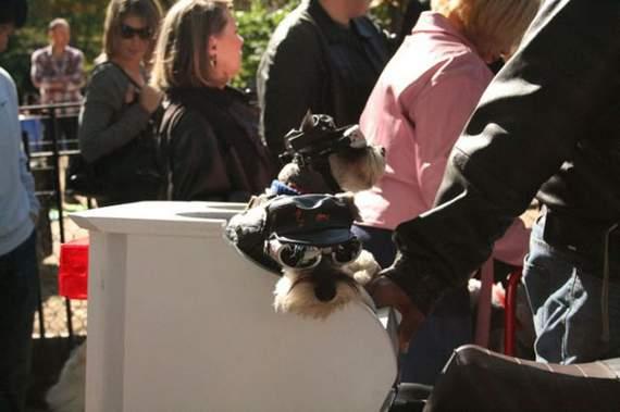 halloween perros disfraces disfraz traje 11
