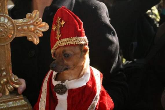 halloween perros disfraces disfraz traje 13