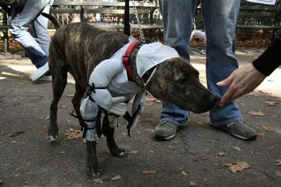 halloween perros disfraces disfraz traje 14