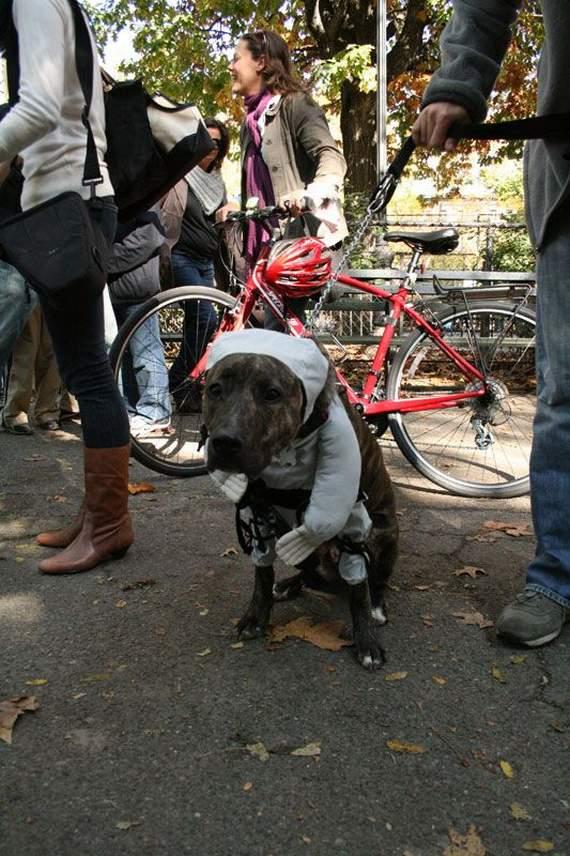 halloween perros disfraces disfraz traje 15