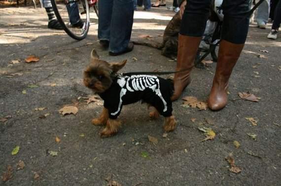 halloween perros disfraces disfraz traje 16