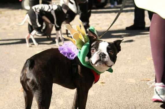 halloween perros disfraces disfraz traje 23