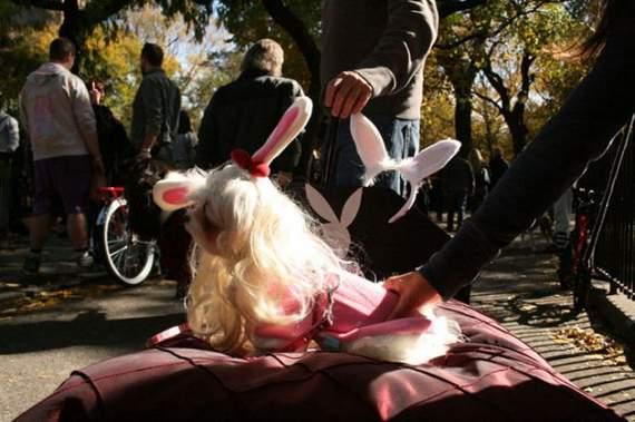 halloween perros disfraces disfraz traje 24