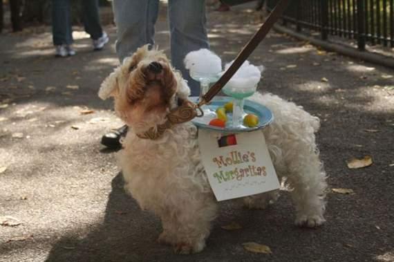 halloween perros disfraces disfraz traje 25