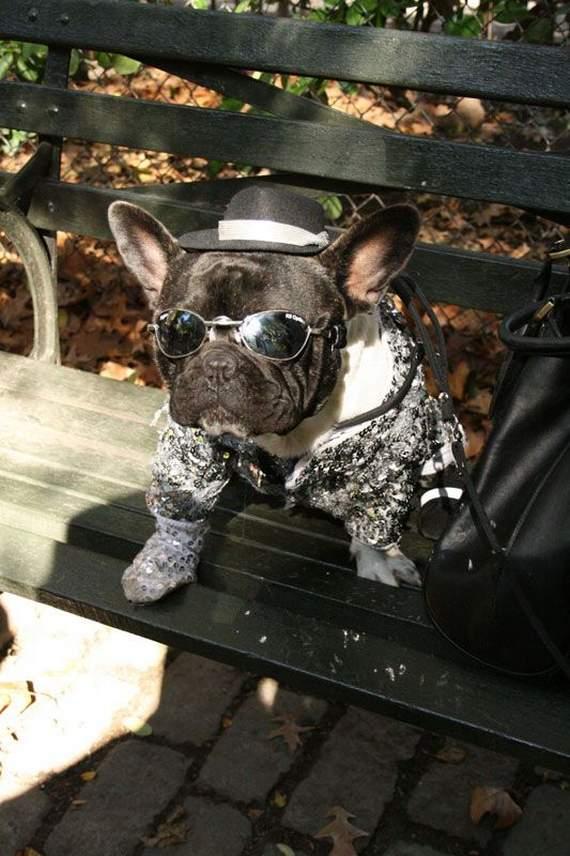 halloween perros disfraces disfraz traje 29