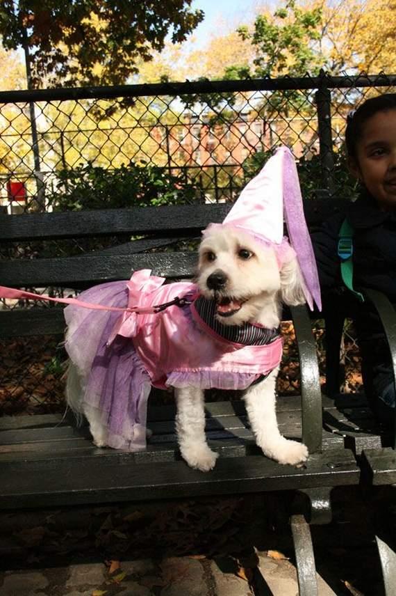 halloween perros disfraces disfraz traje 30