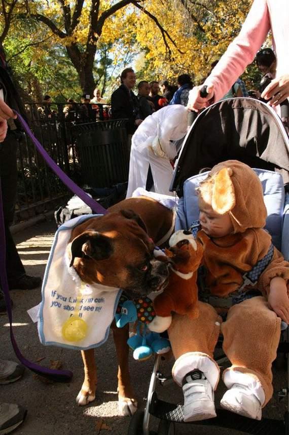 halloween perros disfraces disfraz traje 31