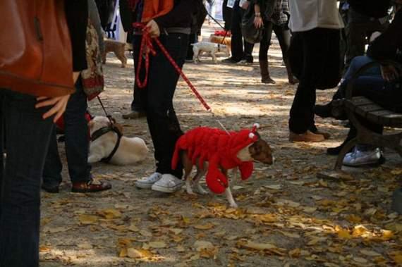 halloween perros disfraces disfraz traje 32