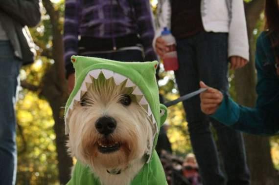 halloween perros disfraces disfraz traje 35