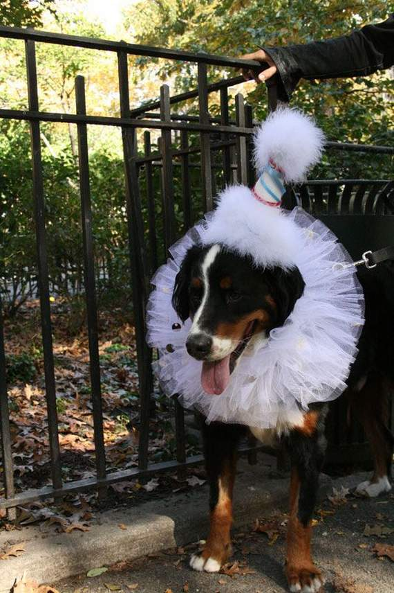 halloween perros disfraces disfraz traje 37