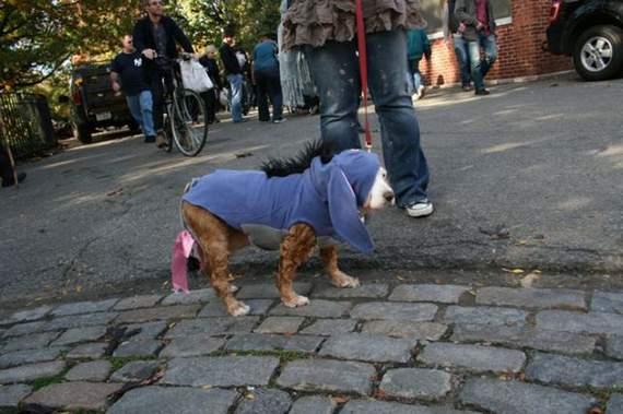 halloween perros disfraces disfraz traje 39