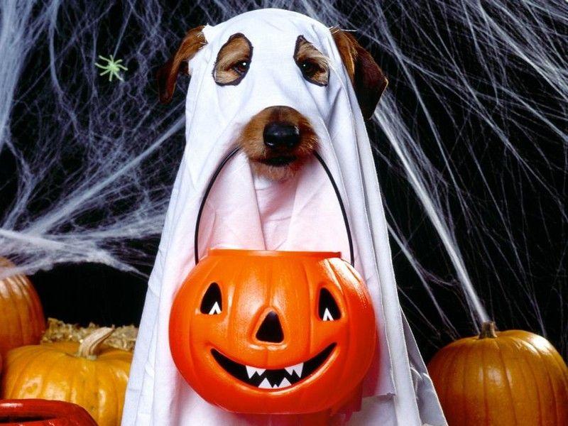 hallowen traje disfraz perro disfraces