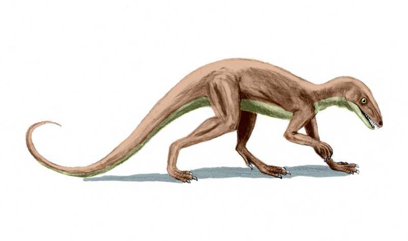 lagosuchus dinosaurio triasico