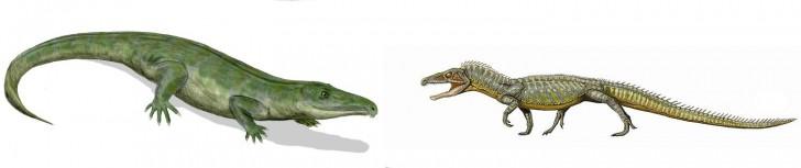 proterosuchus euparkeria arcosaurios dinosaurios primitivos
