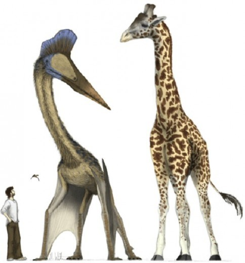 pterosaurio dinosaurio comparacion jirafa