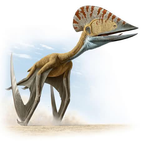 pterosaurio lagarto alado dinosaurio volador sauropsidos arcosaurios