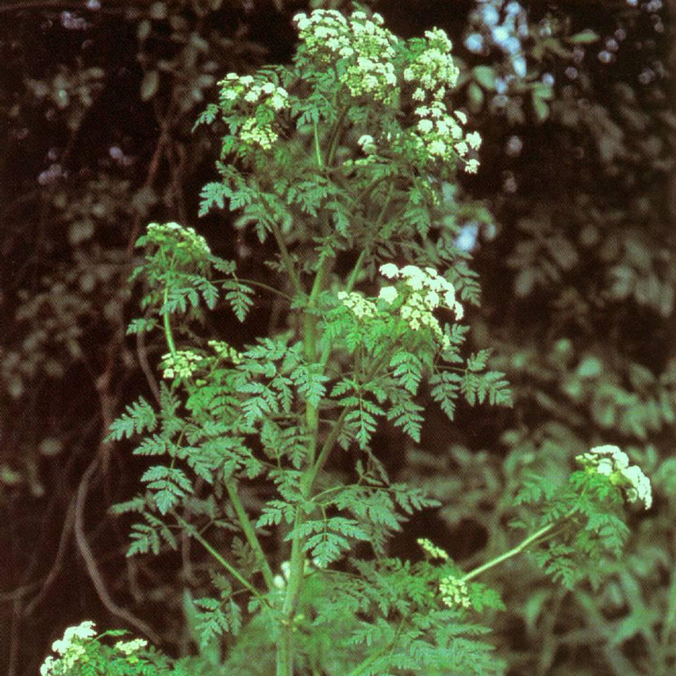 Jardinitis noviembre 2011 for Planta venenosa decorativa