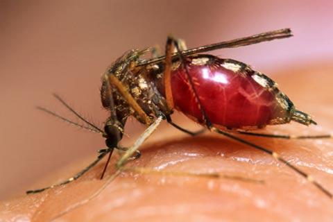mosquito macro imagen ampliada