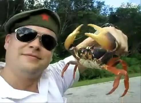 video venganza cangrejo pinzas