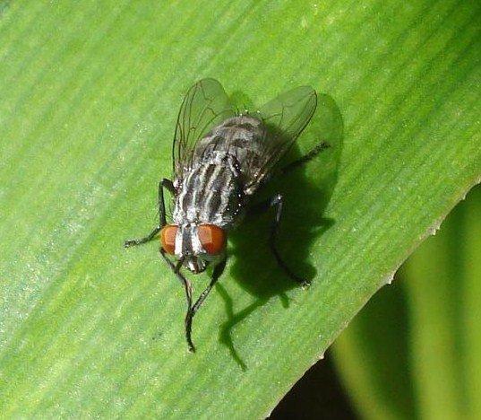 Yo tambien creo que las moscas traman algo con esa frotada de manos