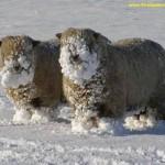 Imágenes de nieve y heladas