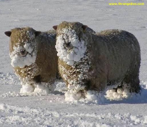 frio nieve hielo helada 33