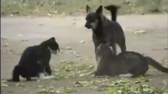pelea perro gatos