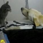 Peleas y juegos entre perros y gatos
