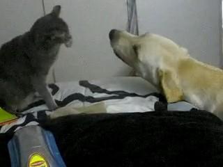 pelea perros gatos