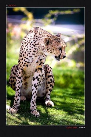 postales felinos james pan 02