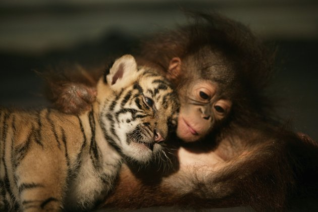 amores inusuales raros animales 01