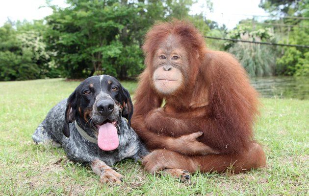 amores inusuales raros animales 06