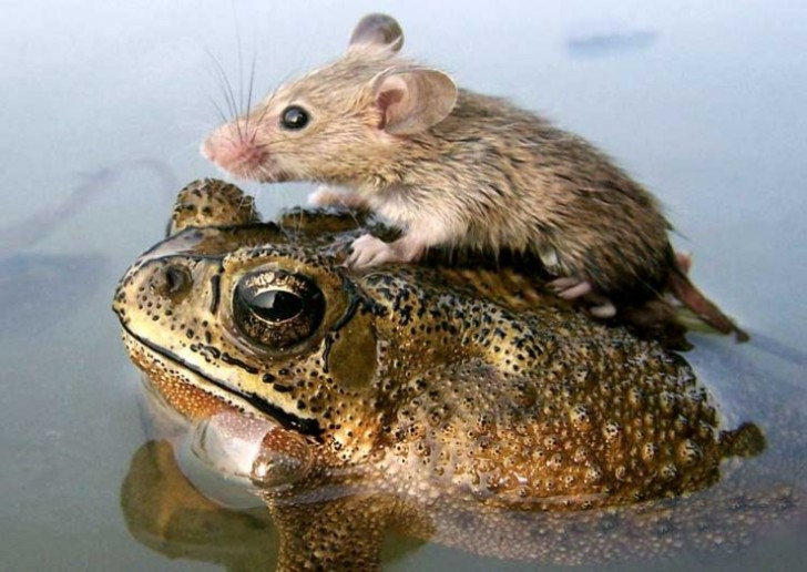 amores inusuales raros animales 12