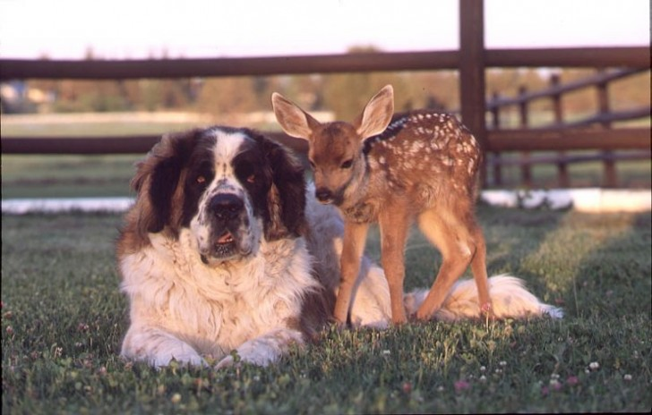 amores inusuales raros animales 18