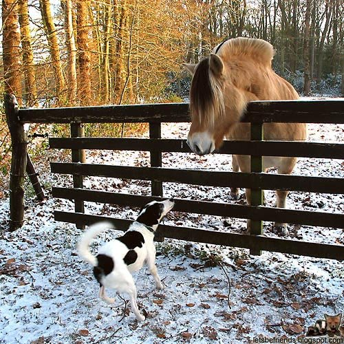 amores inusuales raros animales 20