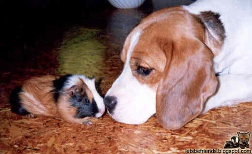 amores inusuales raros animales 21